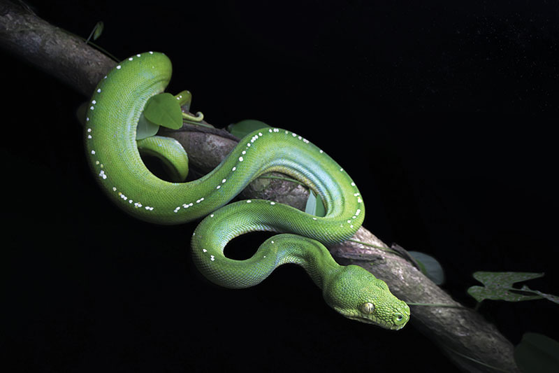 How Do Snakes 'See' In The Dark?