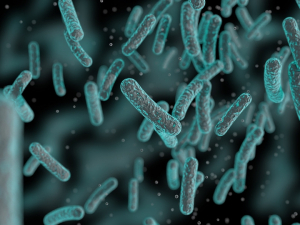 Bacteria - Getty Images