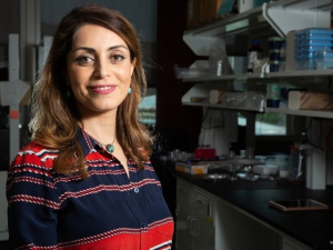 Sheereen Majd, assistant professor of biomedical engineering, is the first to report on targeted delivery of Dp44mT to malignant tumors.