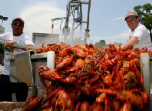 Offshore Industry Crawfish Boil