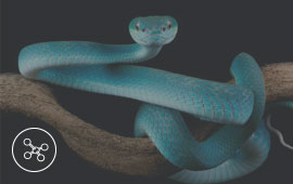 Blue snake on branch